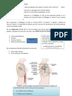 CAP 38 Fisiologia de Guyton 13 edición