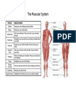 The Muscular System Section A