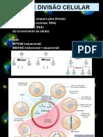 Aula Divisão Celular - Mitose e Meiose 3