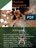 Arthropod 3
