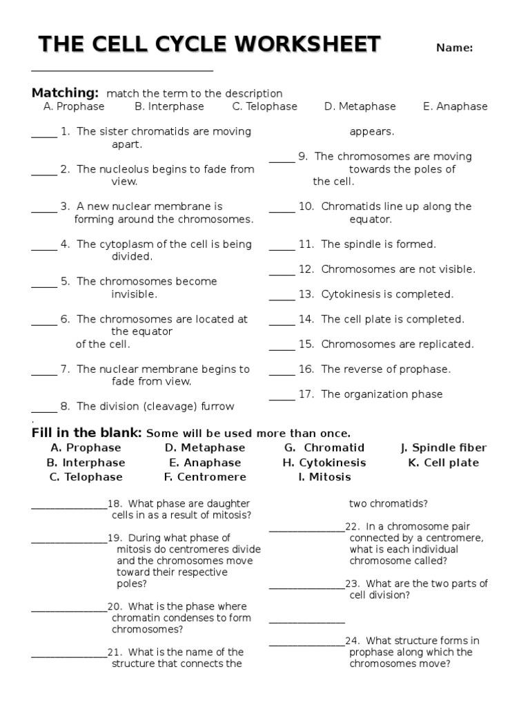 Cell Cycle Worksheet Mitosis – Mitosis Matching Worksheet