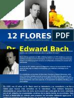 Curso 12 Flores de Temperamento