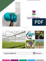 brochure_digital_vid.pdf