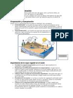 Relacion del agua con las plantas(2).doc