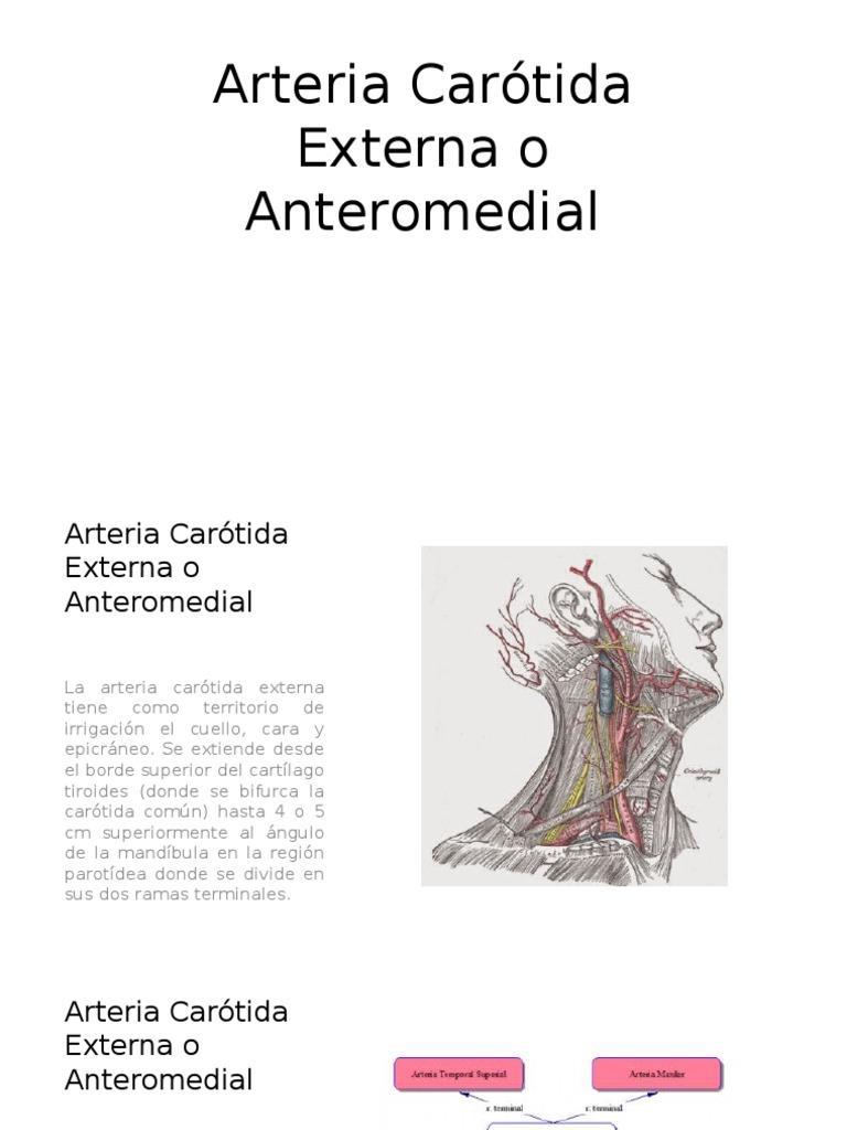 ARTERIA CAROTIDA EXTERNA .pptx