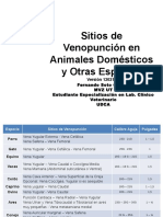 Sitios de Venopunción en Animales Domésticos y Otras especies