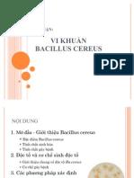 Vi khuan Bacillus cereus