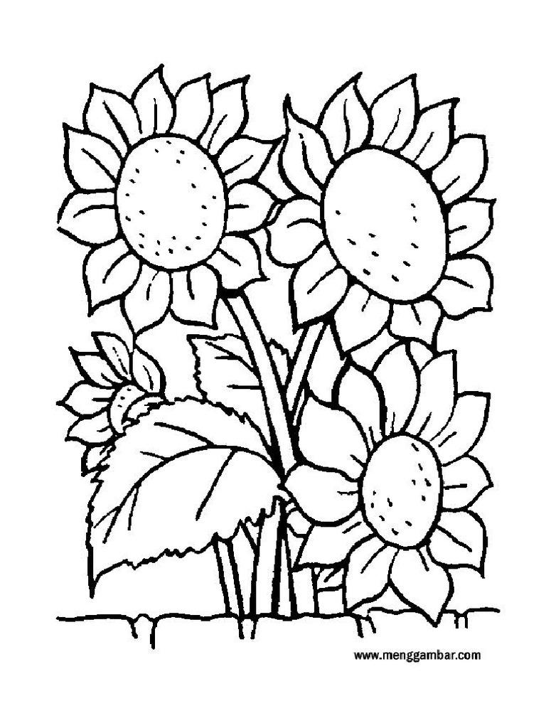 Mewarnai Bunga Matahari