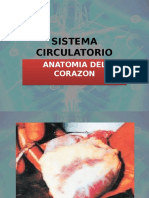 Sistema Circulatorio 1. Anatomia