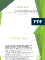 Biologia 2a Clase Licdo Robert Macquaid La Célula
