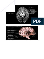Cerebro y mas