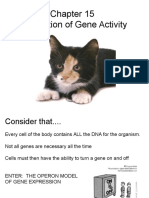 Ch 15 Regulation of Gene Activity