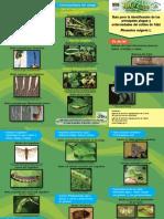 Guía Para La Identificación de Las Principales Plagas y Enfermedades Del Cultivo de Frijol Phaseolus Vulgaris L