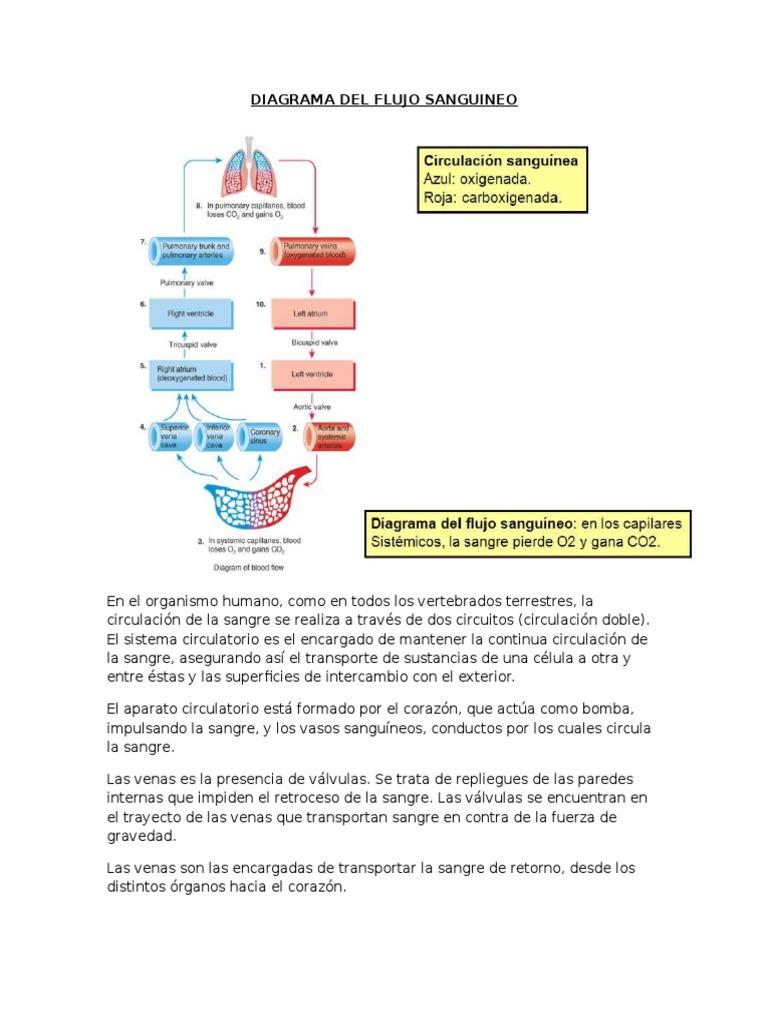 Circuito Sanguineo : Diagrama del flujo sanguineo