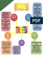 harta conceptuala tinerete