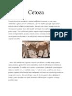 cetoza