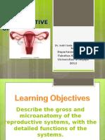 Female Reproductive Anatomy Translete
