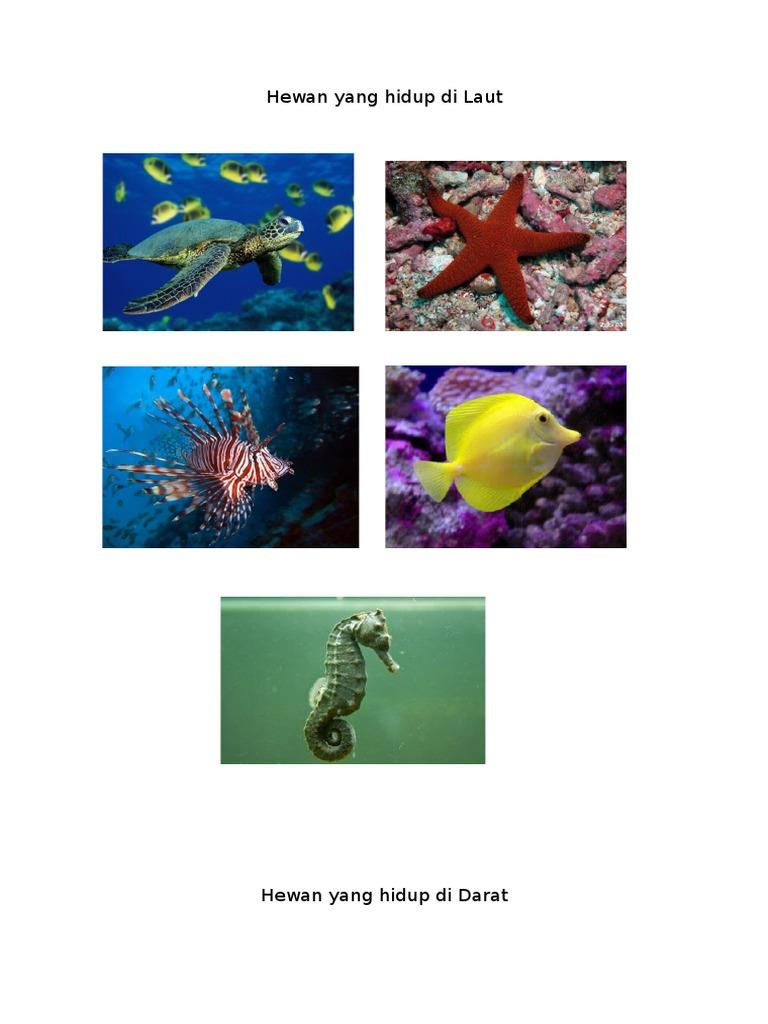 700+ Gambar Hewan Yang Hidup Di Laut Gratis Terbaik