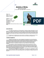 Ficha AGUILA REAL _Aquila chrysaetos_.pdf