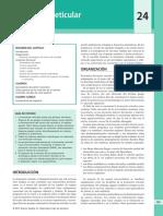 2 - Formación Reticular - Fitzgerald.pdf