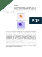 Giardia lamblia 2.docx