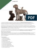 Clasificación de Razas de Perros Según La FCI