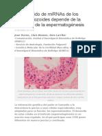 El Contenido de MiRNAs de Los Espermatozoides Depende de La Eficiencia de La Espermatogénesis