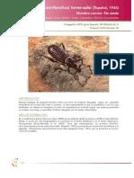 otiorhynchus_torres_tcm7-21950.pdf