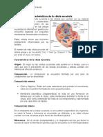 Características de La Célula Eucariota y Procariota