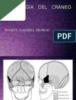 1 Clase Anatomia Craneo 2013