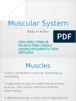 muscularsystemnotes 2017 ahi