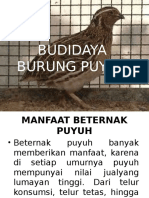Budidaya Puyuh (Minggu 4)