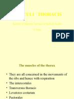 6. Musculi Thorax