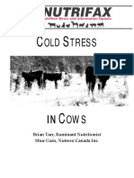 Cold Stress in Cows