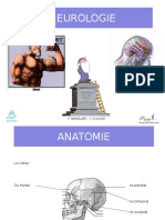 neurologie pp.ppt
