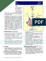 Hipotiroidismo Folleto Marcas