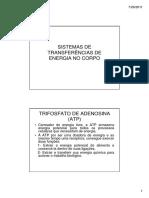 2 AULA SISTEMAS TRANSFERÊNCIAS DE ENERGIA NO CORPO.pdf