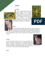 FAUNA Y FLORA DE GUATEMALA.docx