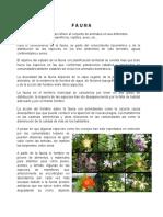 flora y.docx