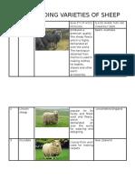 Wool Yielding Varieties of Sheep