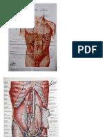 GI tract anatomy.pptx