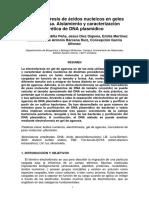 17 ELECTROFORESIS ACS NUCLEICOS GELES AGAROSA.pdf