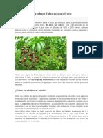 El Árbol Que Produce Jabón Como Fruto