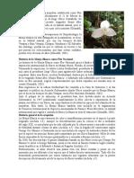 Historia de La Monja Blanca