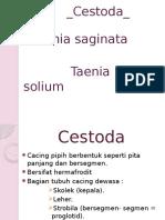 Ppt Parasit Taenia Sp