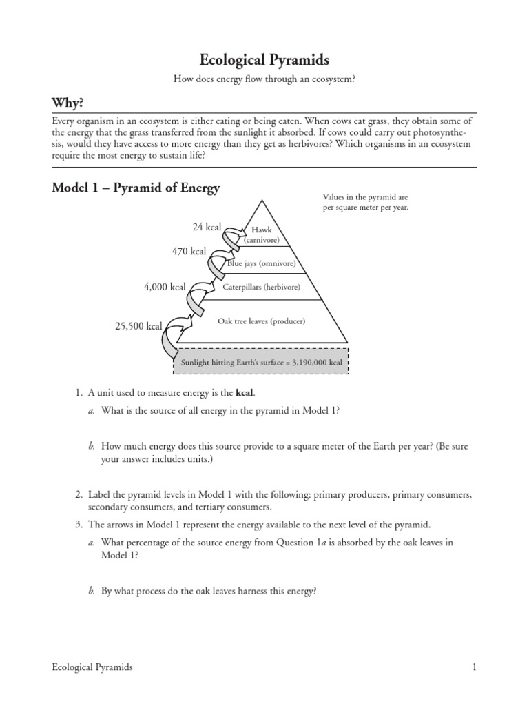 Ecology Practice Worksheet Answers