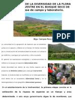 Evaluación de La Diversidad de La Flora y - Copia