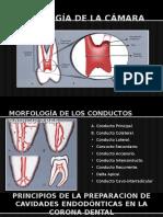 Anatomia Endo