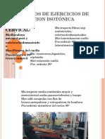 ejercicios Contraccion isotonica