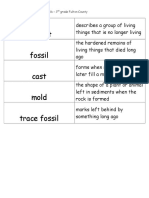 fossils flashcards 3rd grade